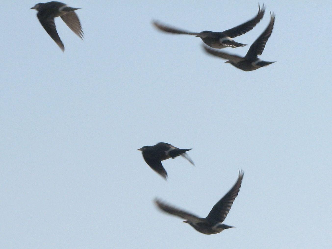 bird50.jpg