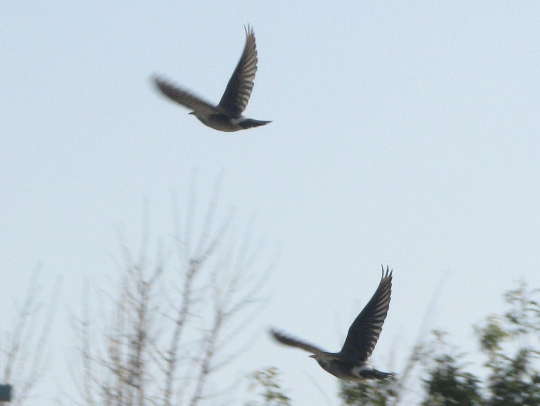 bird51.jpg