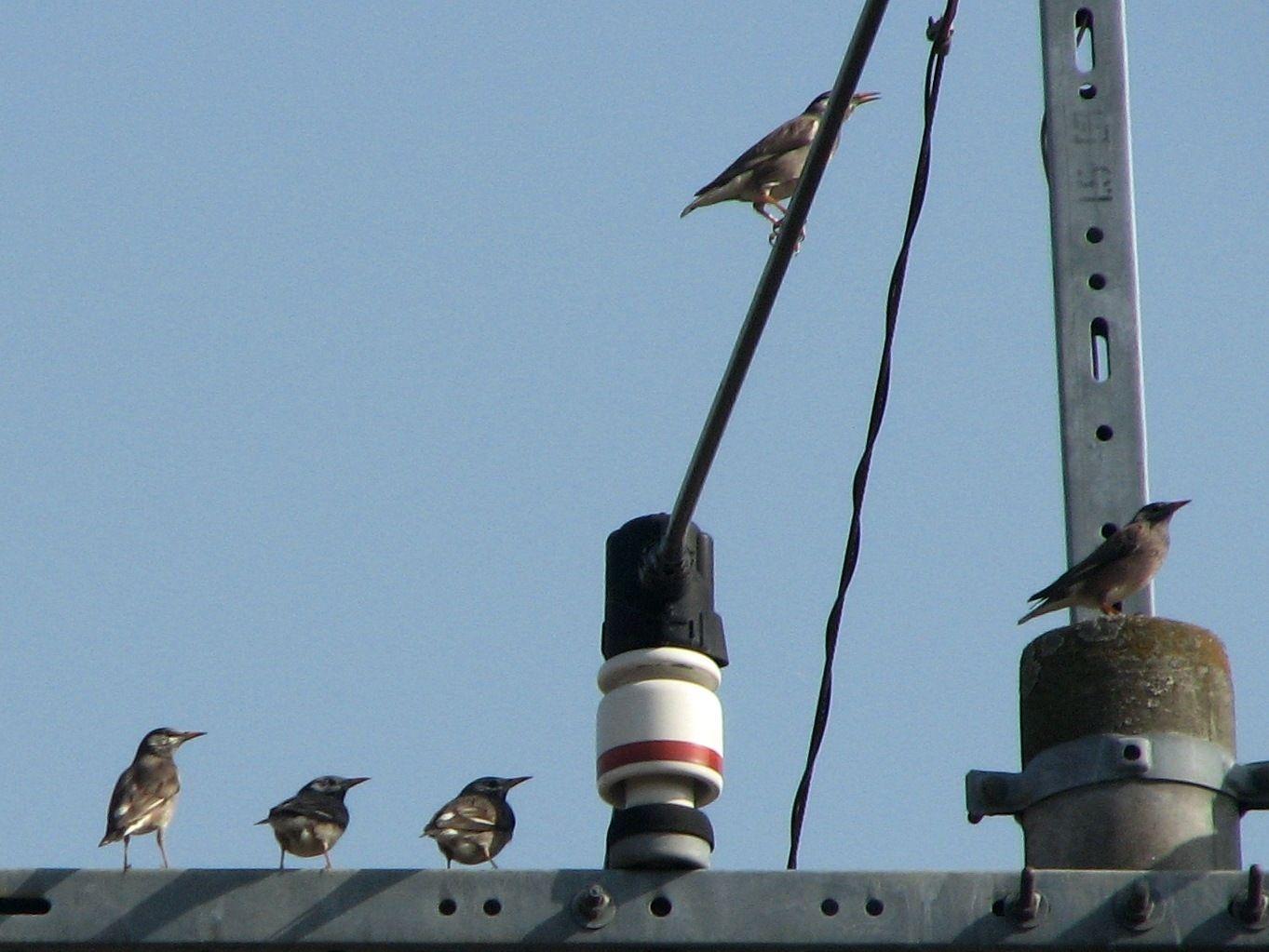bird52.jpg
