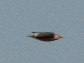 bird53.jpg
