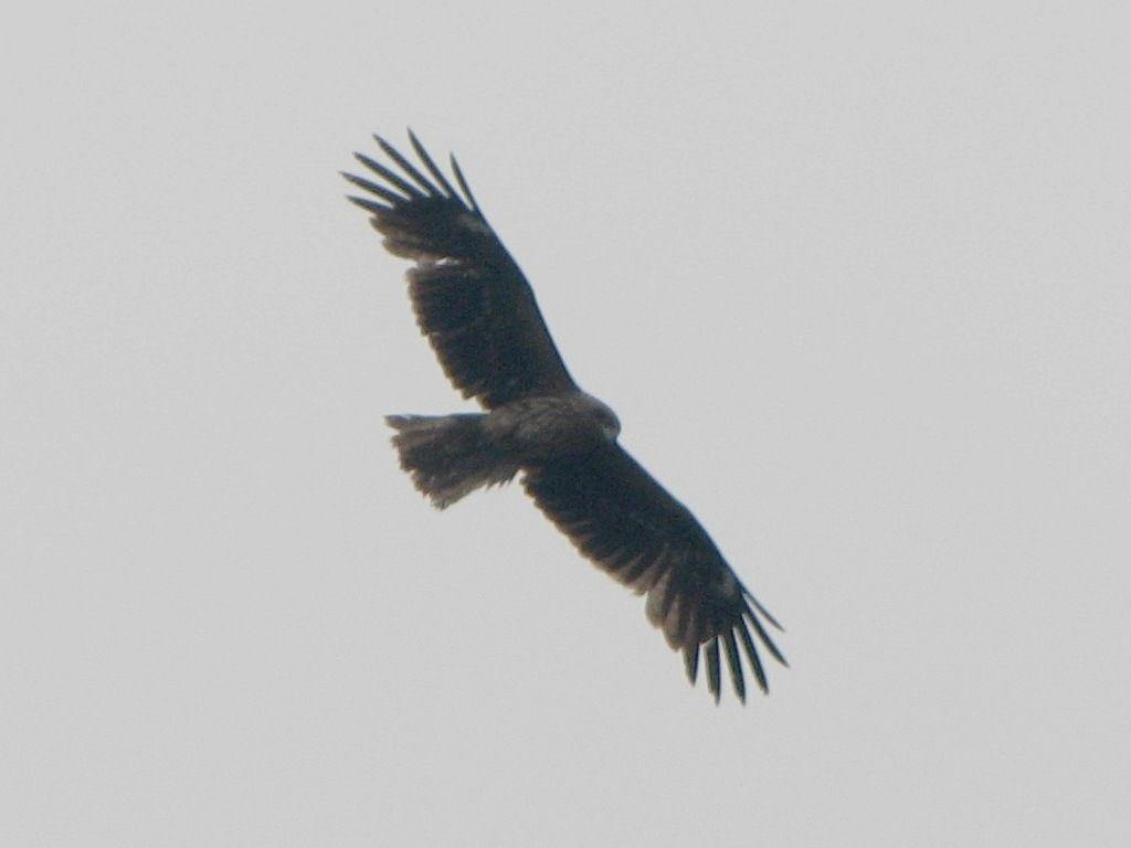bird67.jpg