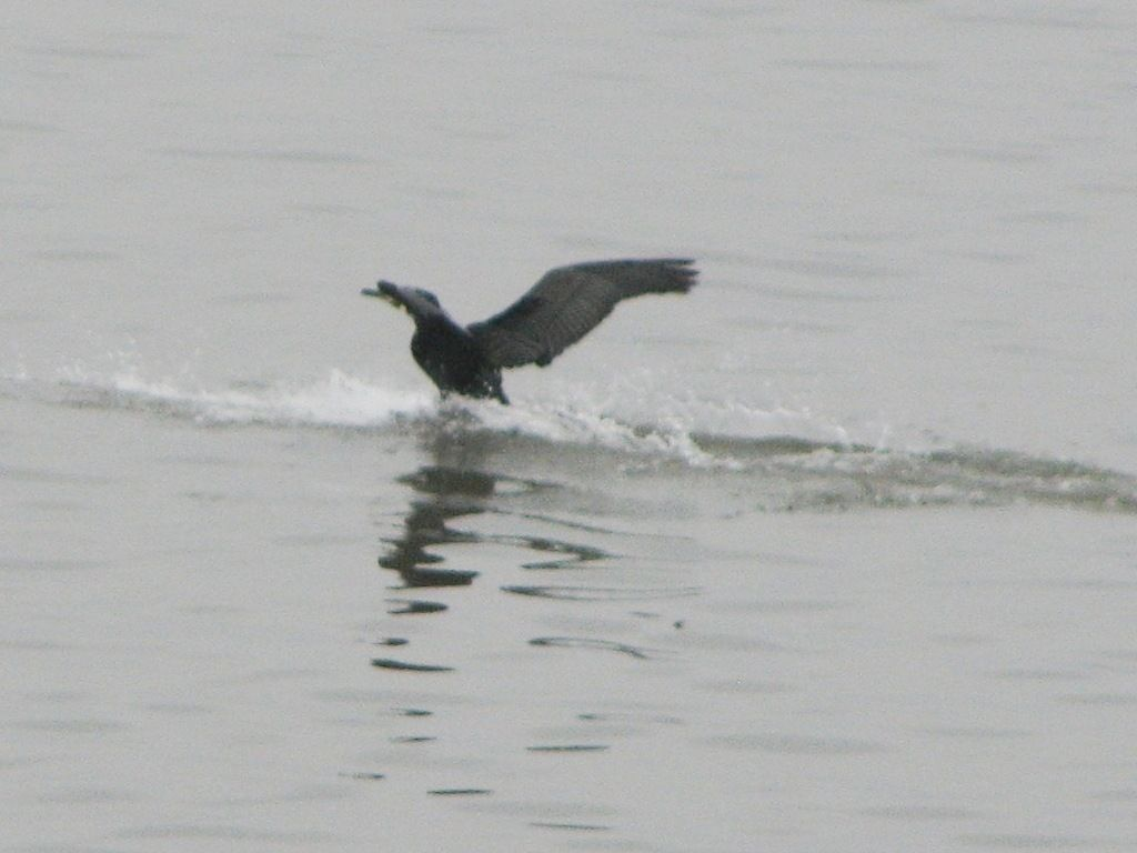 bird70.jpg