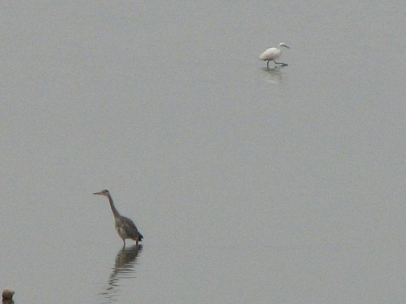 bird71.jpg