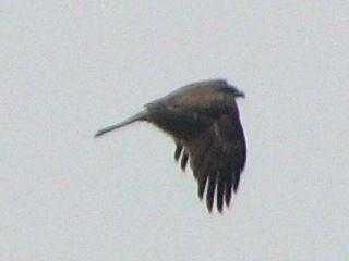 bird76.jpg
