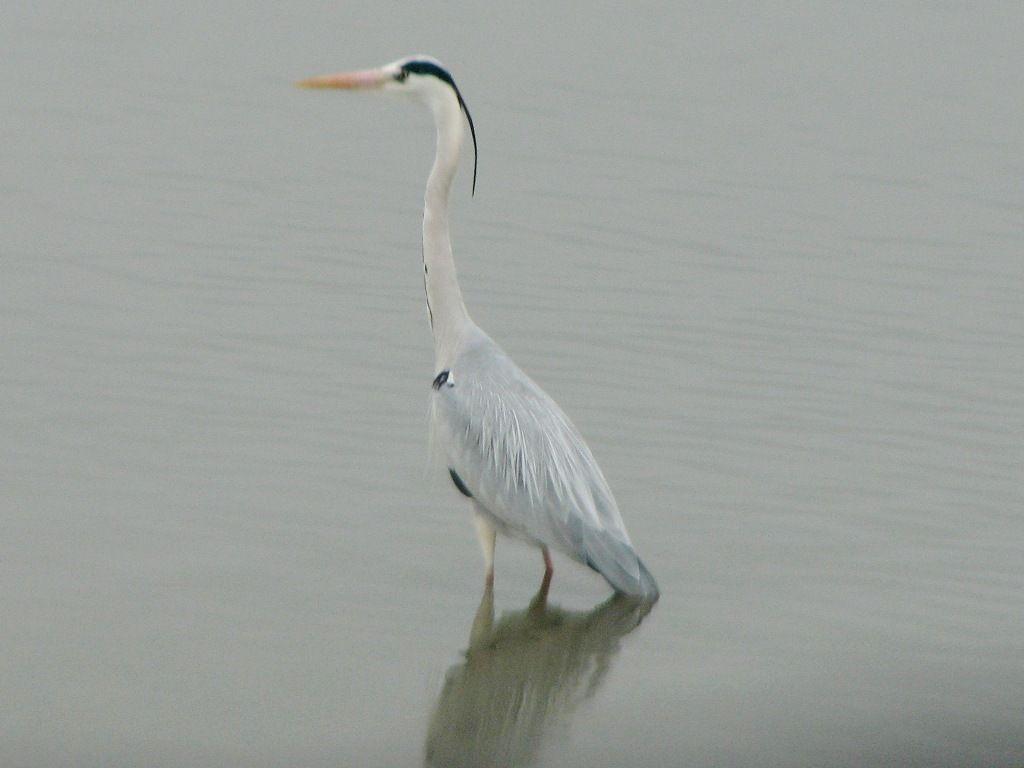 bird78.jpg