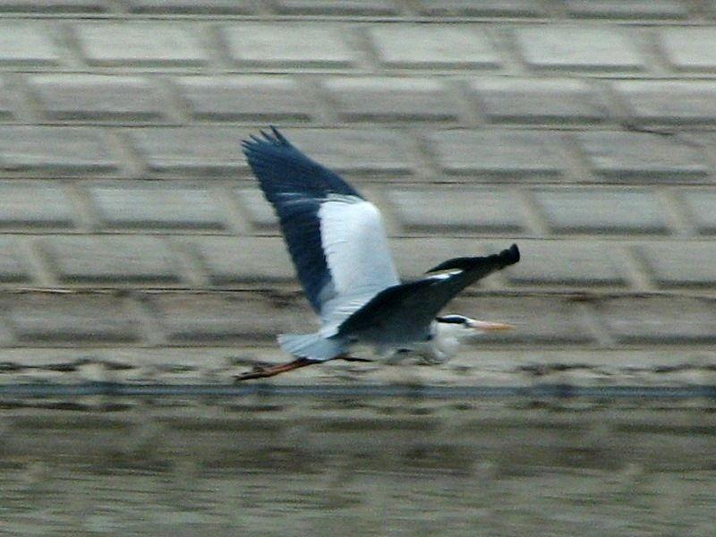 bird81.jpg