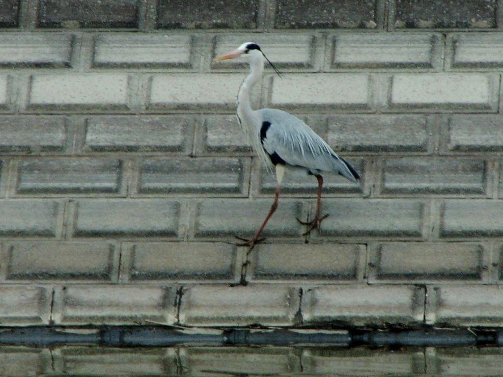 bird82.jpg