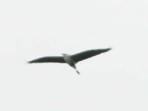 bird84.jpg