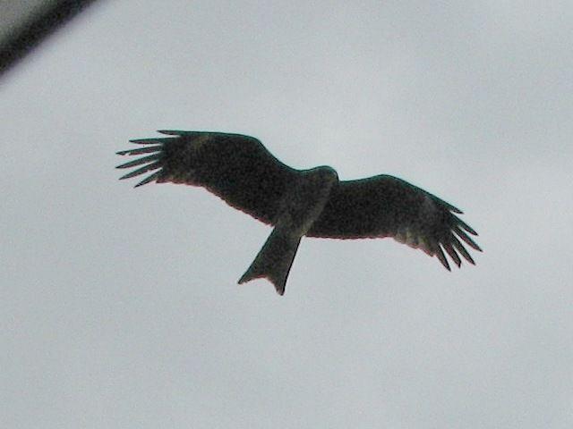 bird85.jpg