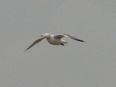 bird90.jpg