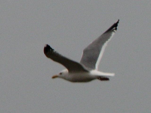 bird92.jpg
