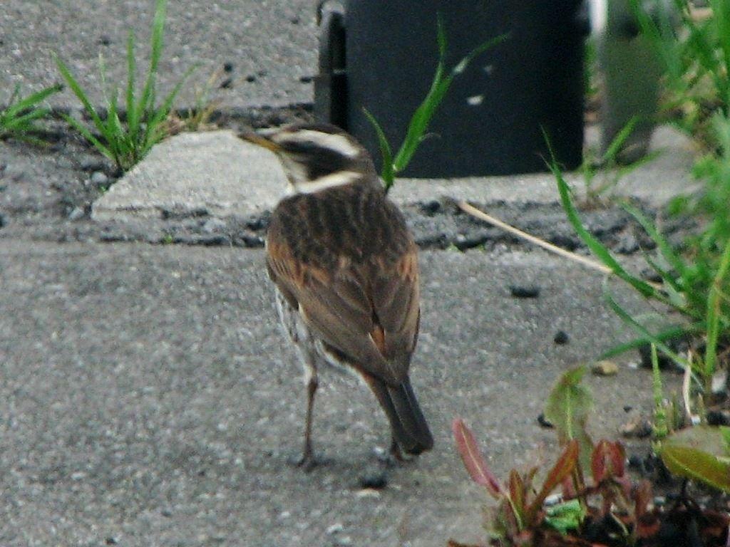 bird94.jpg