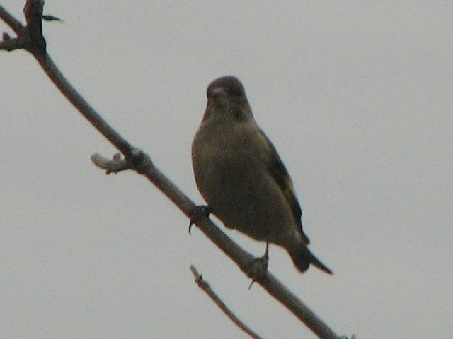 bird95.jpg