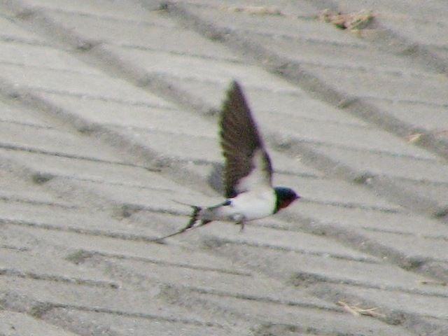 bird98.jpg