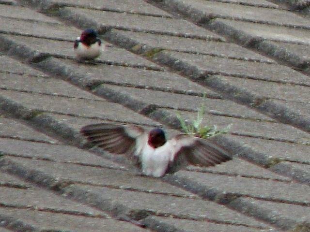 bird99.jpg