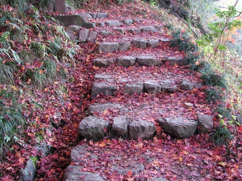 階段の枯れ葉