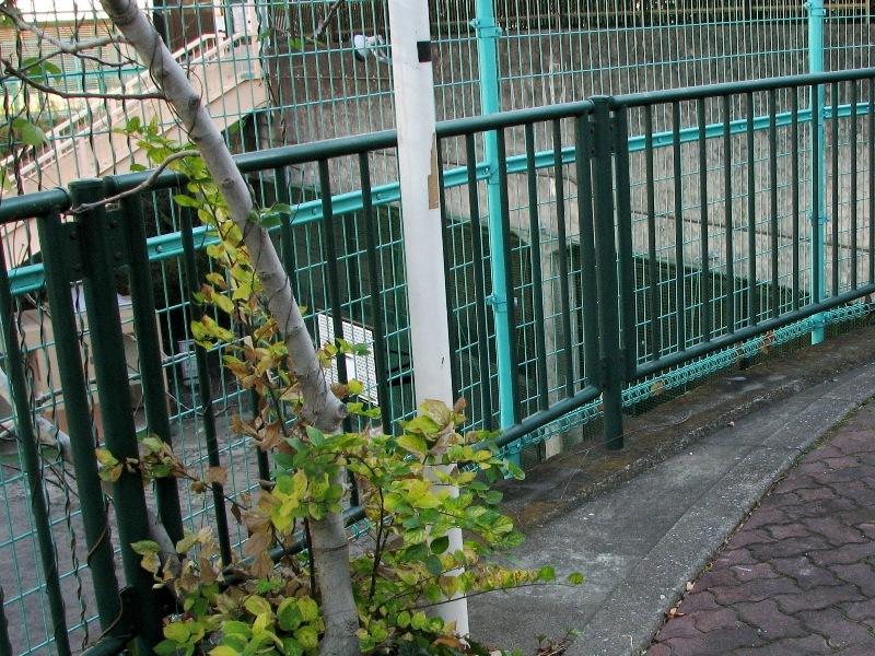 築地川公園下のトンネル