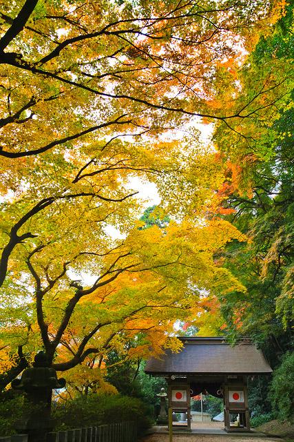 宗形神社の紅葉 宗像神社 米子市