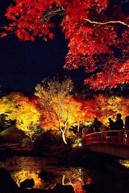 島根県 大根島 由志園 紅葉 牡丹