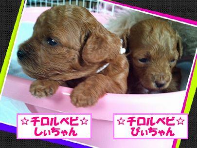 LINEcamera_share 20120724