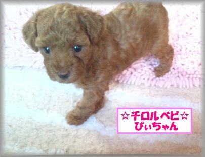 DSC_2688 20120809 チロルベビぴぃ