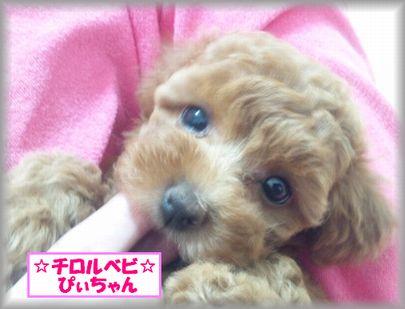 DSC_3115 20120823 チロルベビしぃ