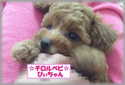 DSC_3125 20120823 チロルベビしぃ
