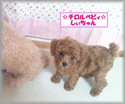 DSC_3244 20120903 チロルベビしぃ
