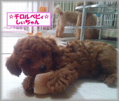 DSC_3262 20120904 チロルベビしぃ
