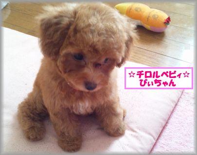 DSC_3367 20120907 チロルベビぴぃ