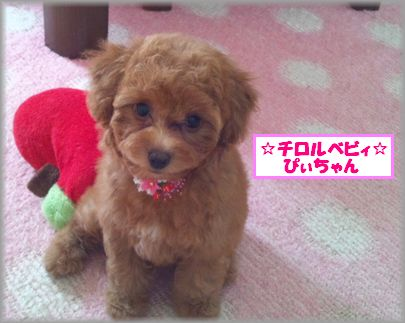 DSC_3361 20120907 チロルベビぴぃ