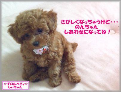 DSC_3372 20120910 チロルベビしぃ