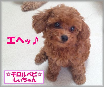 DSC_3489 20120912 チロルベビしぃ