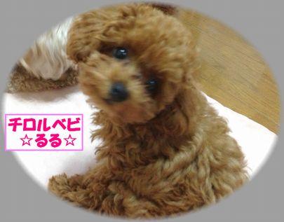 20121003 るるIMG_0285