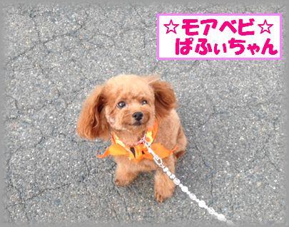 20121007 ぱふぃちゃん