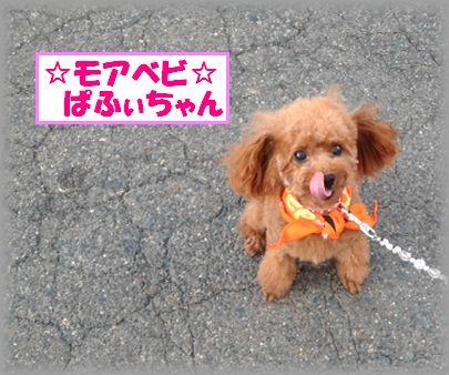 20121007 ぱふぃちゃんimage