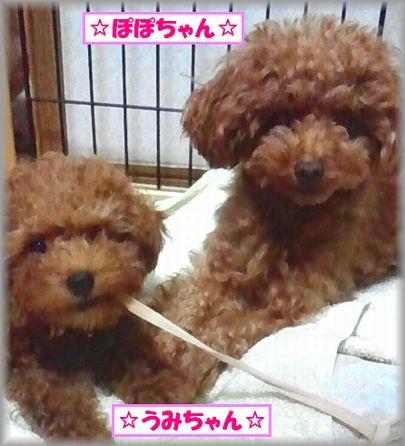 20121014 ぽぽ・うみ