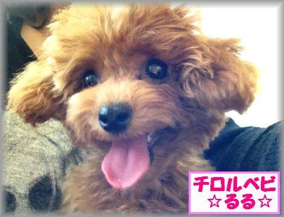 2012 1024 るるIMG_0946