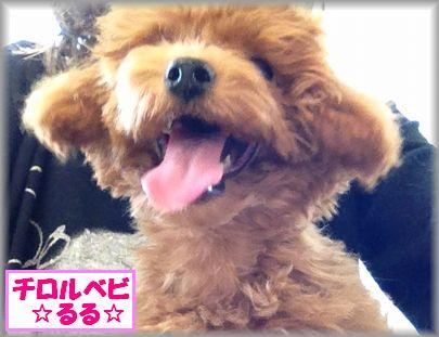 2012 1024 るるIMG_6333