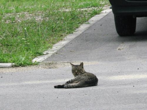 cat_201306281316.jpg