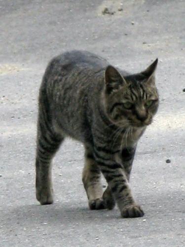 cat_201306281319.jpg