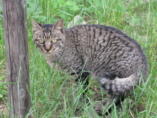 cat_201306281324.jpg