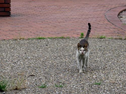 cat_201306281330.jpg