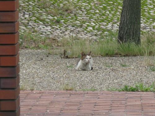 cat_201306281333.jpg