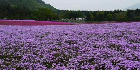 20120519富士芝桜まつり