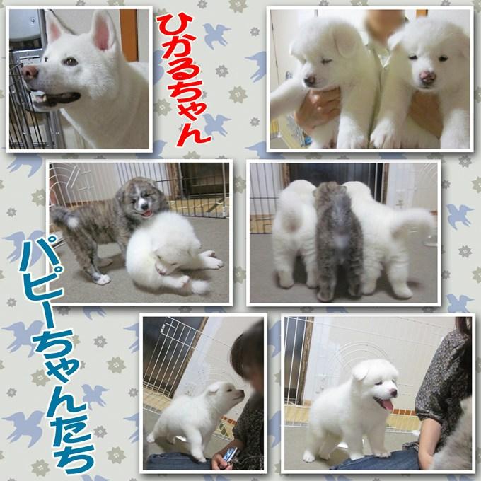 10_20120811134241.jpg