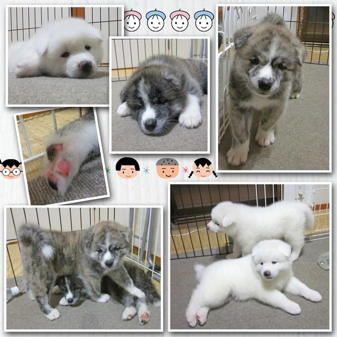11_20120811134240.jpg