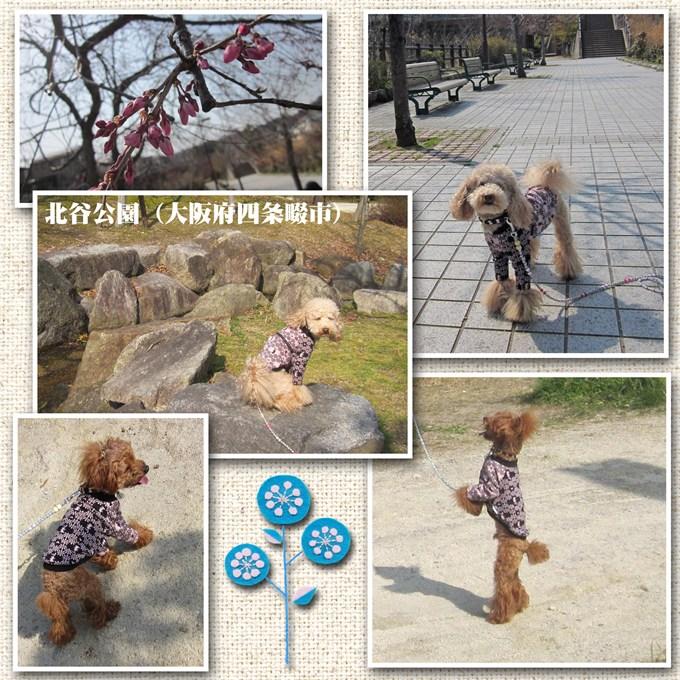 13_20120429234441.jpg