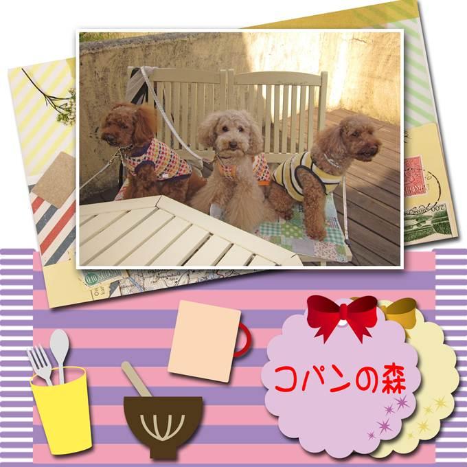 24_20121111084726.jpg