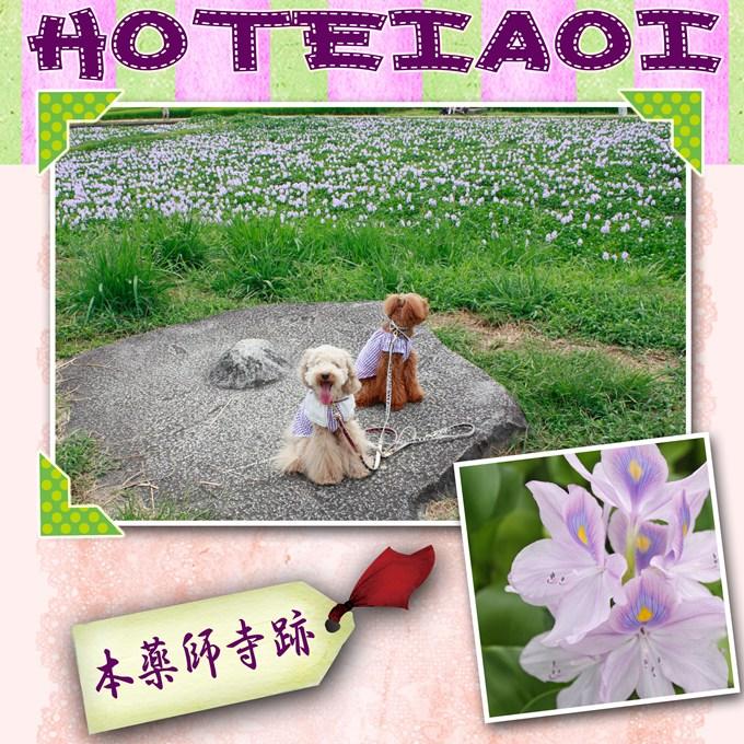 35_20120917140220.jpg